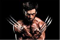 Wolverine Wallpaper 22