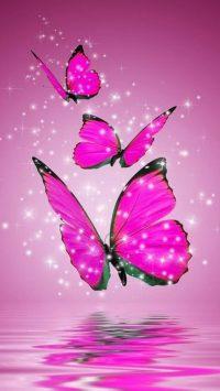 Butterfly Wallpaper 43
