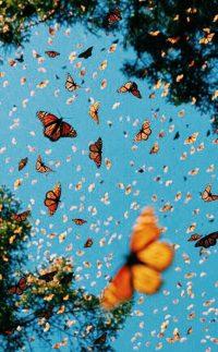 Butterfly Wallpaper 40