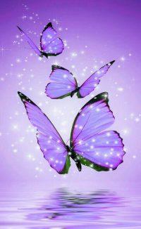 Butterfly Wallpaper 46