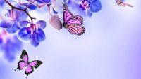 Butterfly Wallpaper 11