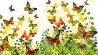 Butterfly Wallpaper 12