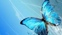 Butterfly Wallpaper 13