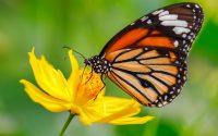 Butterfly Wallpaper 22