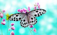 Butterfly Wallpaper 23