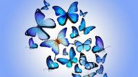 Butterfly Wallpaper 8