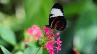 Butterfly Wallpaper 10