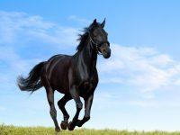 Horse Wallpaper 34