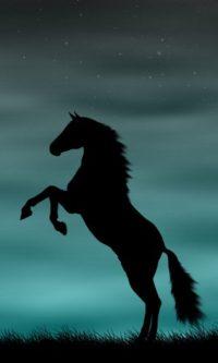 Horse Wallpaper 32