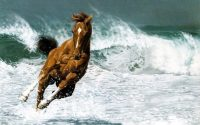 Horse Wallpaper 31