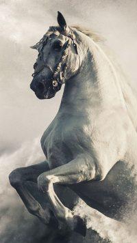 Horse Wallpaper 30