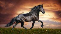 Horse Wallpaper 44