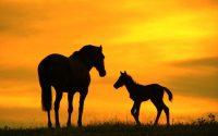 Horse Wallpaper 29