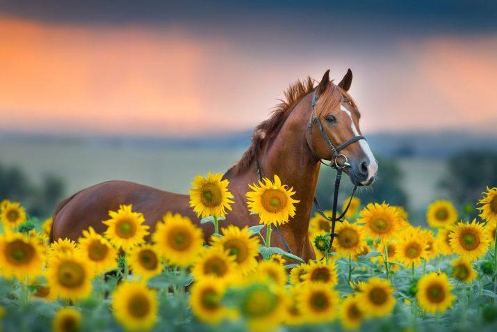 Horse Wallpaper 1