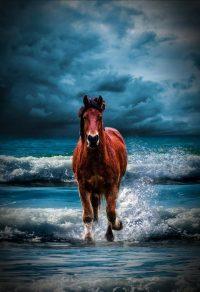 Horse Wallpaper 42