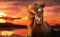 Horse Wallpaper 25