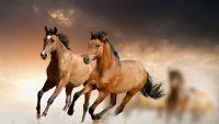 Horse Wallpaper 24