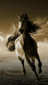 Horse Wallpaper 23