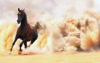 Horse Wallpaper 22