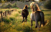 Horse Wallpaper 41