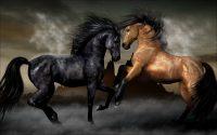 Horse Wallpaper 38