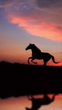 Horse Wallpaper 37