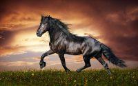 Horse Wallpaper 35