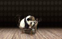 Panda Wallpaper 11