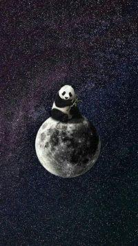 Panda Wallpaper 28