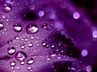 Purple Wallpaper 36