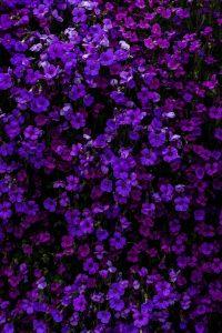 Purple Wallpaper 38