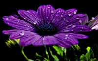 Purple Wallpaper 43