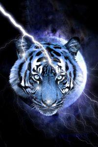 Tiger Wallpaper 27