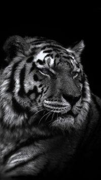 Tiger Wallpaper 22