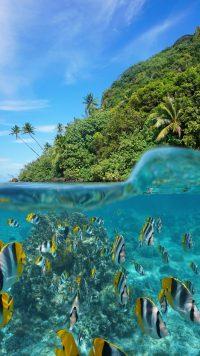 Underwater Wallpaper 10