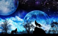 Galaxy Wolf Wallpaper 7