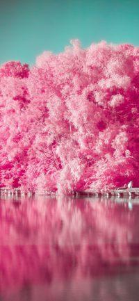 Pink Wallpaper 29