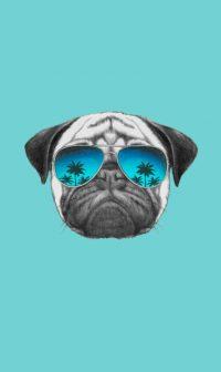 Pug Wallpaper 5