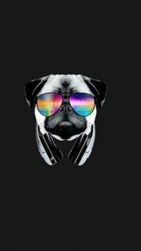 Pug Wallpaper 7