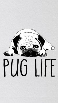 Pug Wallpaper 9