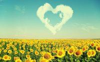 Sunflower Wallpaper 5