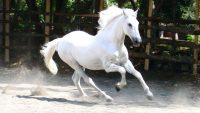 Horse Wallpaper 5