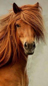 Horse Wallpaper 20