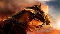 Horse Wallpaper 10