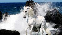 Horse Wallpaper 19