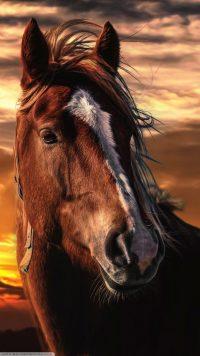 Horse Wallpaper 18
