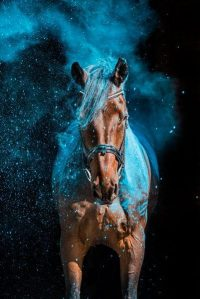 Horse Wallpaper 15