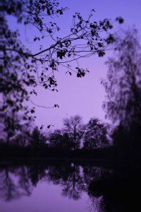 Purple Wallpaper 18