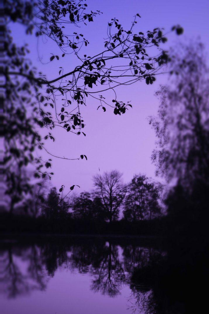 Purple Wallpaper 1