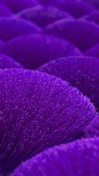 Purple Wallpaper 14